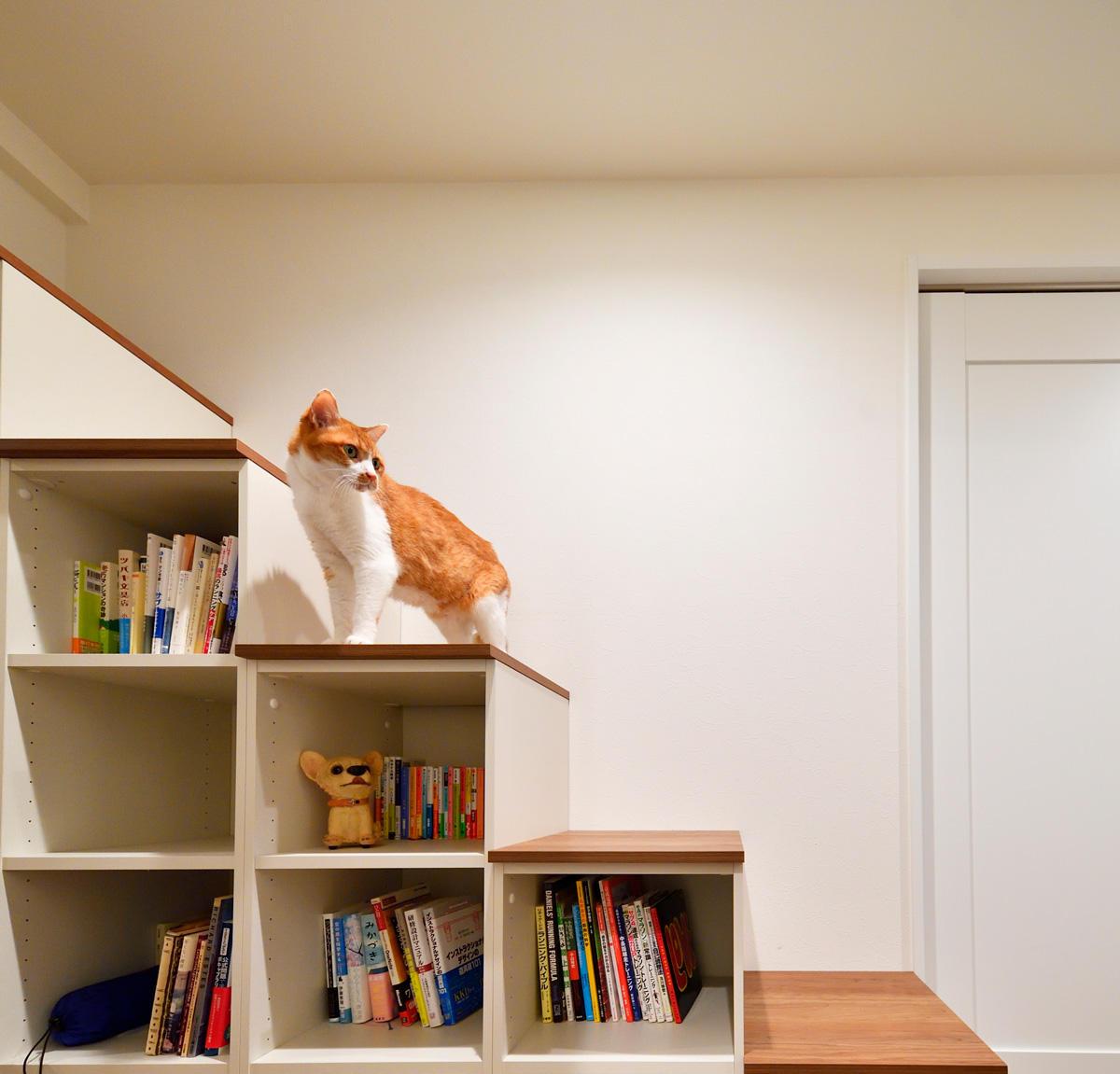 ワンルームとして使える贅沢な空間。愛猫とのゆとりある暮らし